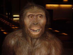 800px-Australopithecus_afarensis