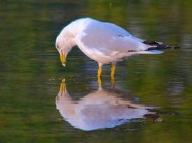 Mirror-Water - Bird