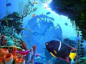 coral-clock-3d-screensaver