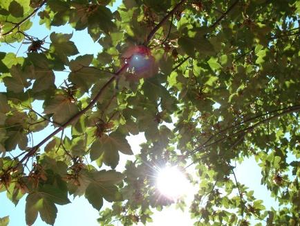 sun-through-leaves